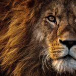 Por qué deberías amar ser del signo Leo